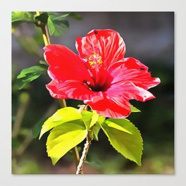 Beautiful Red Tropical Hibiscus Flower Canvas Print