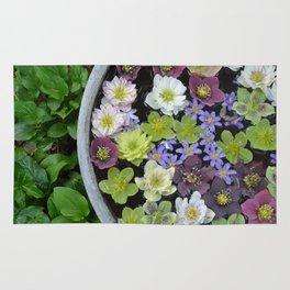 Colorful hellebore flowers Rug