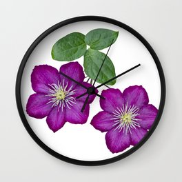 Purple clematis on a stem isolated on white background Wall Clock