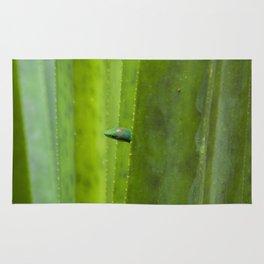 Peekaboo! A gecko in the agave Rug