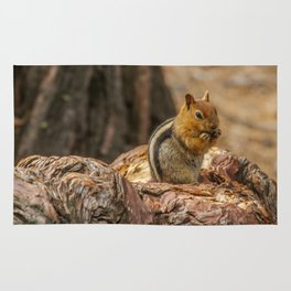 The Squirrel and the Redwood Rug