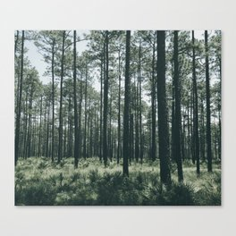 Deep Southern Forest Canvas Print