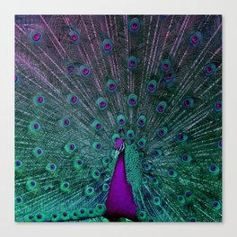 BLOOMING PEACOCK Canvas Print
