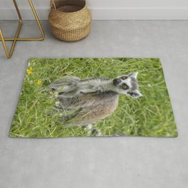 Beautiful ring-tailed lemur in the grass Rug