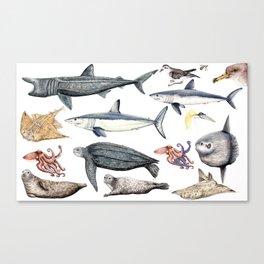 Marine wildlife Canvas Print