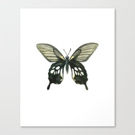 Butterfly - Nature Study #2 Canvas Print