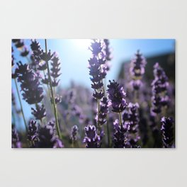 Lavender Lighting Canvas Print