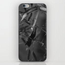 Colibri iPhone Skin
