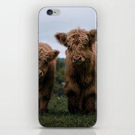 Scottish Highland Cattle Calves - Babies playing II iPhone Skin