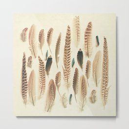 Found Feathers Metal Print