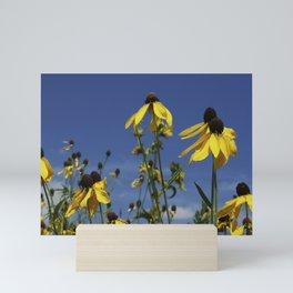 Yellow Coneflower, Ratibida, with azure prairie sky Mini Art Print