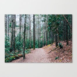 Forest Fears Canvas Print