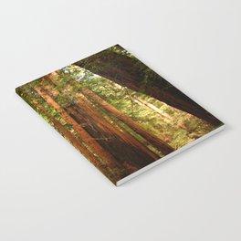 Muir Woods Walkway Notebook