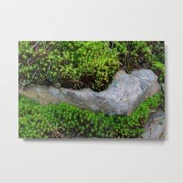 Vibrant Moss Metal Print
