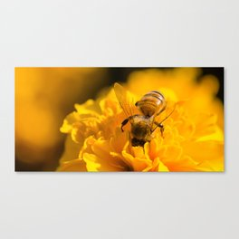Head First Bee Canvas Print
