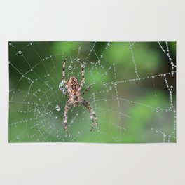 Macro Spider and Spider Web Rug