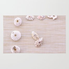 Urchins and seashells nautical design on textured background. Rug