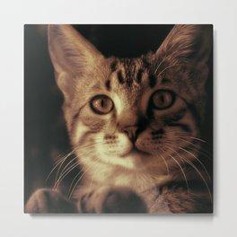 Kitten In The Window Metal Print