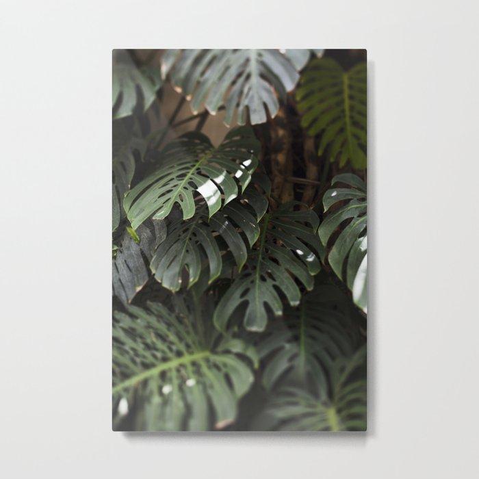 Monstera - botanical photography Metal Print