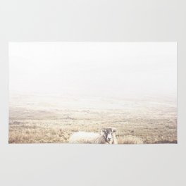 Sheep, Ireland. Rug