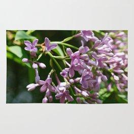 Syringa vulgaris Rug