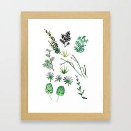 Garden Plants Framed Art Print