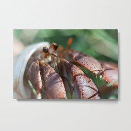 Mr. Crabs Metal Print