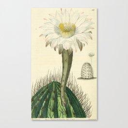 No. 13 Canvas Print