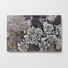 Smattering of Lichens Metal Print
