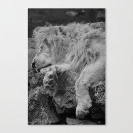 White Lion Resting Canvas Print
