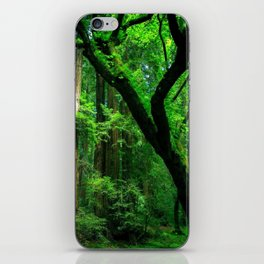 Enchanted forest mood II iPhone Skin