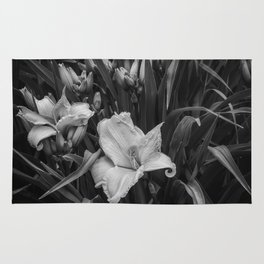 Orange Daylilies bw Rug