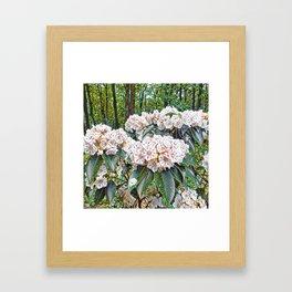 Rhododendron Framed Art Print