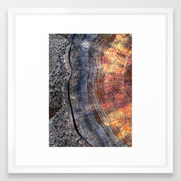 Macro Tree Stump Ring Framed Art Print