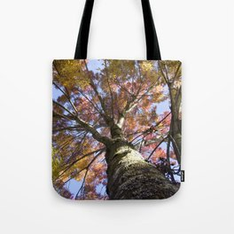 Beautiful Trees / 15 Tote Bag