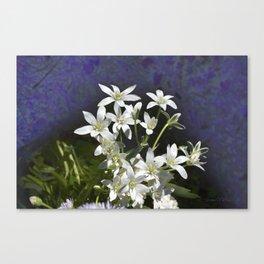 White 6 Petal Star Wildflowers Canvas Print