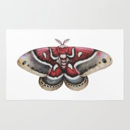 Moth - HYALOPHORA GLOVERI - Glover's silk moth   Painting   Watercolour   Insect Rug