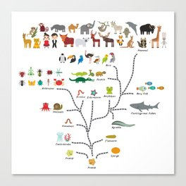 Evolution scale from unicellular organism to mammals. Evolution in biology, scheme evolution Canvas Print