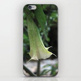 Brugmansia iPhone Skin