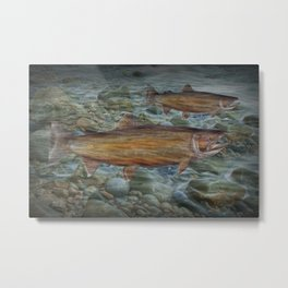 Steelhead Trout Migration in Fall Metal Print
