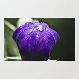 Fresh Raindrops on Purple Rug