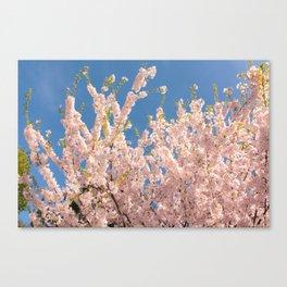 Cherry Blossom Wave Canvas Print