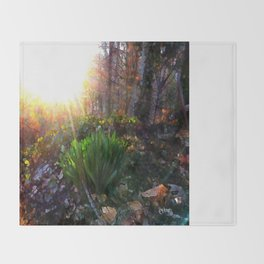 'Sun Awakening Sleeping Daffodils' Throw Blanket