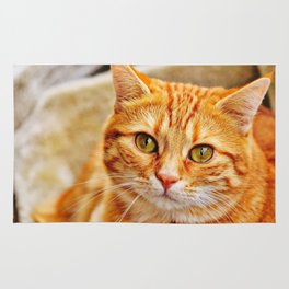 Cute red cat Rug
