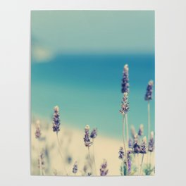 beach - lavender blues Poster