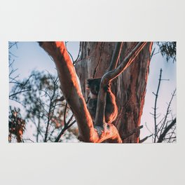 Koala at Sunset Rug