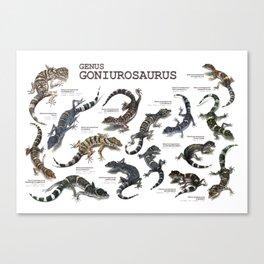Genus Goniurosaurus Canvas Print