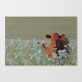 Cow Hide Canvas Print