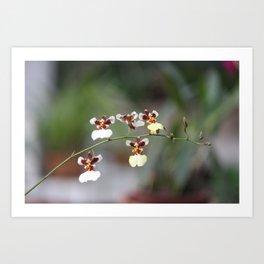 A Beauty Orquídea Art Print