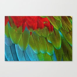 Catalina Macaw Feathers Canvas Print